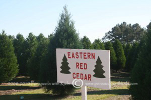 Upcoming Holiday Activities in and around Pensacola