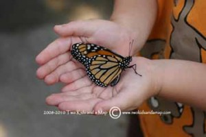 Monarch Madness at Panhandle Butterfly House